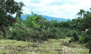 N/A Land for sale in Nam Bo Luang, Chiang Mai